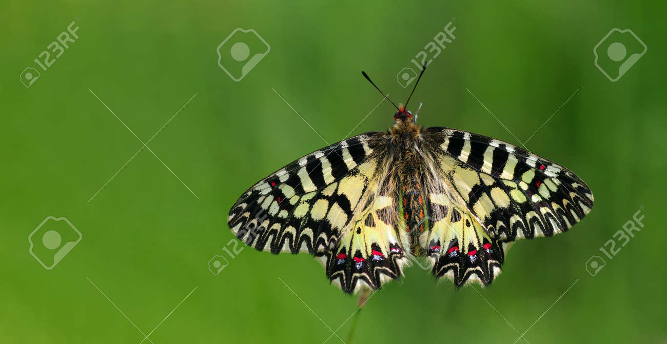 colorful butterfly on green meadow copy space - 169620180