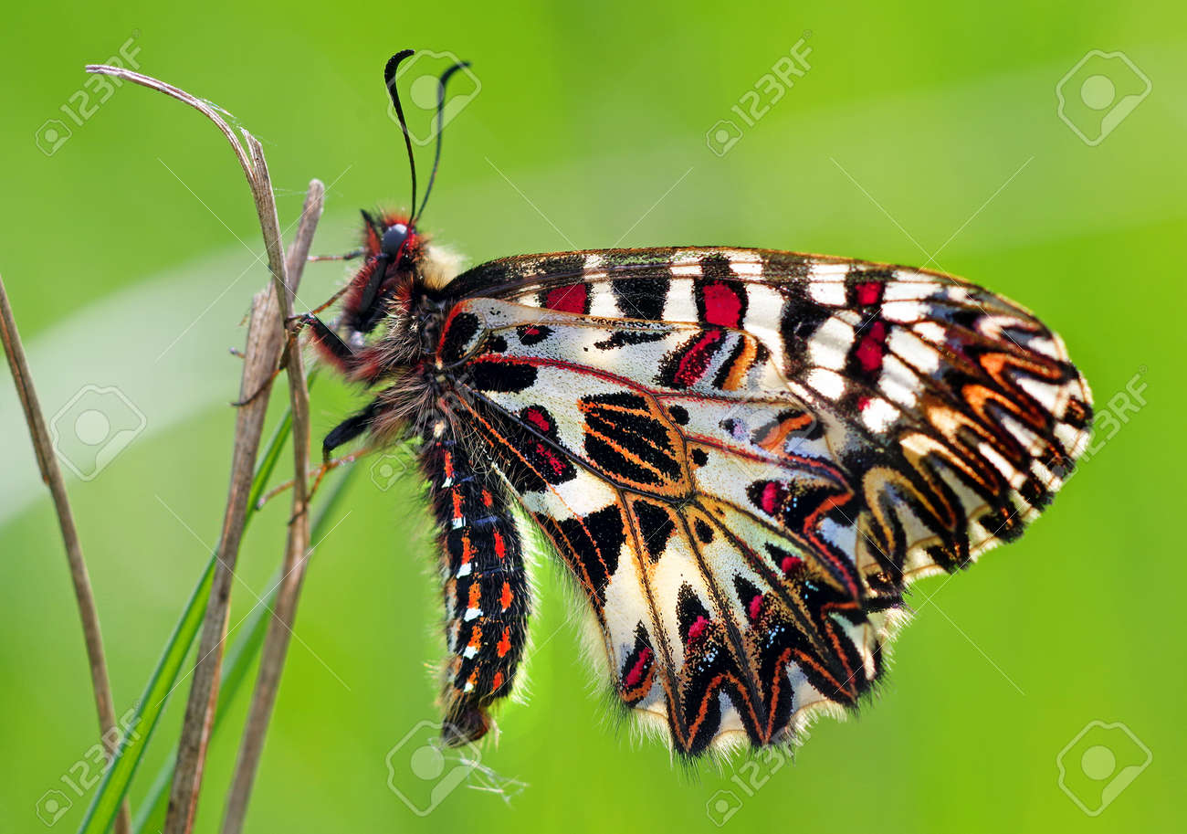 colorful butterfly on green meadow copy space - 169620185