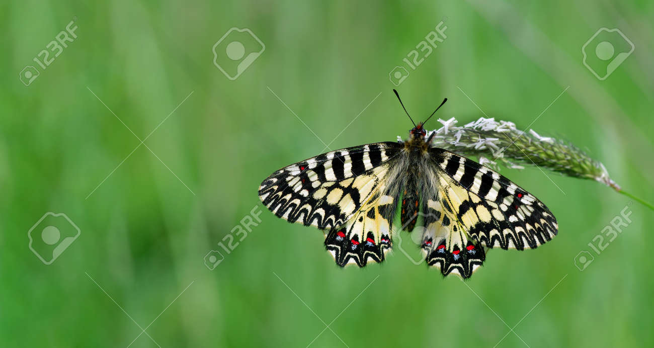 colorful butterfly on green meadow copy space - 169620187