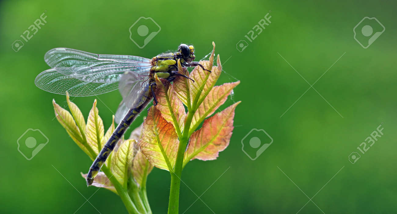 young dragonfly sitting on a branch. copy space - 169620188