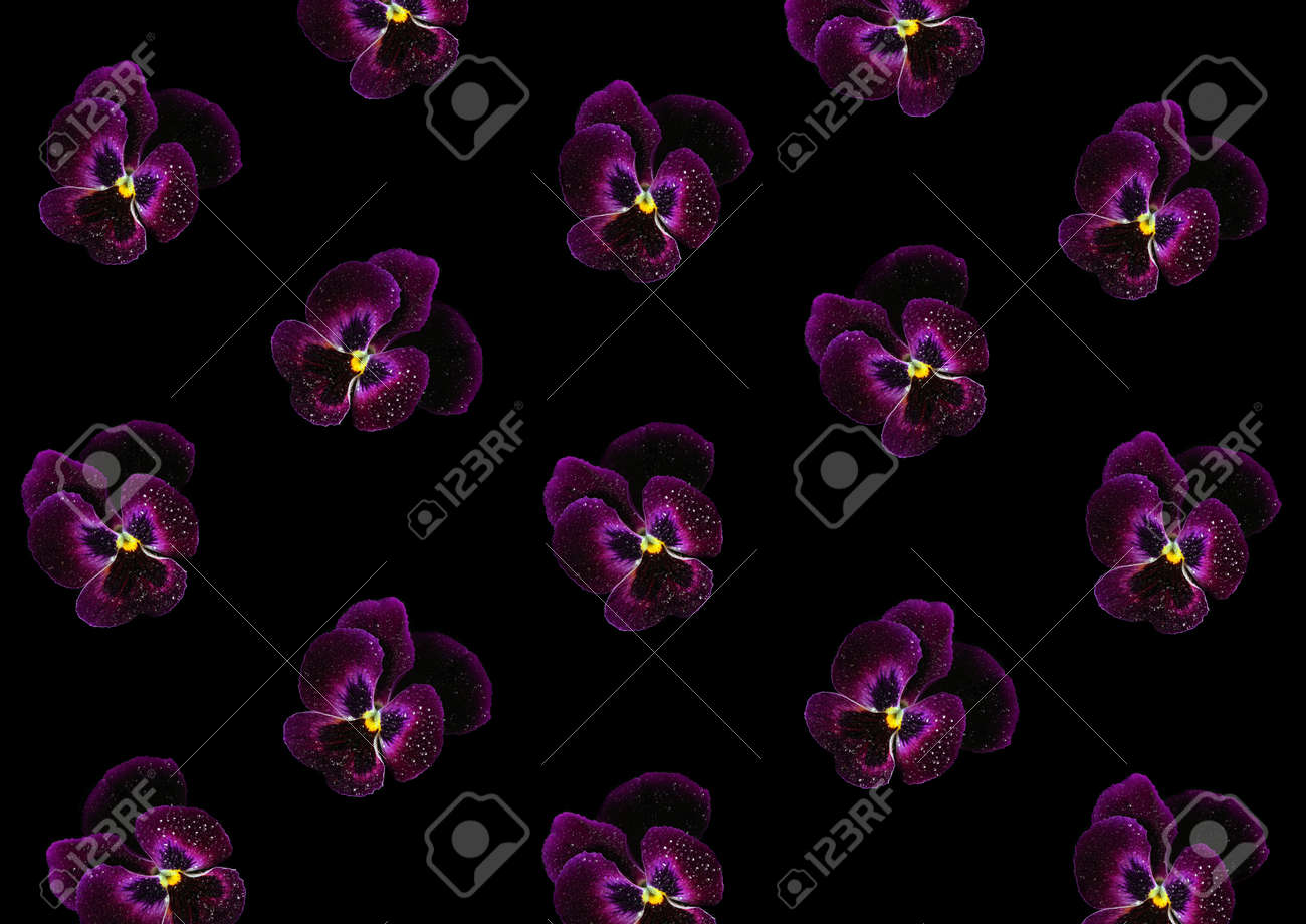 abstract floral background of purple pansies on black. violets in drops of water - 169620203
