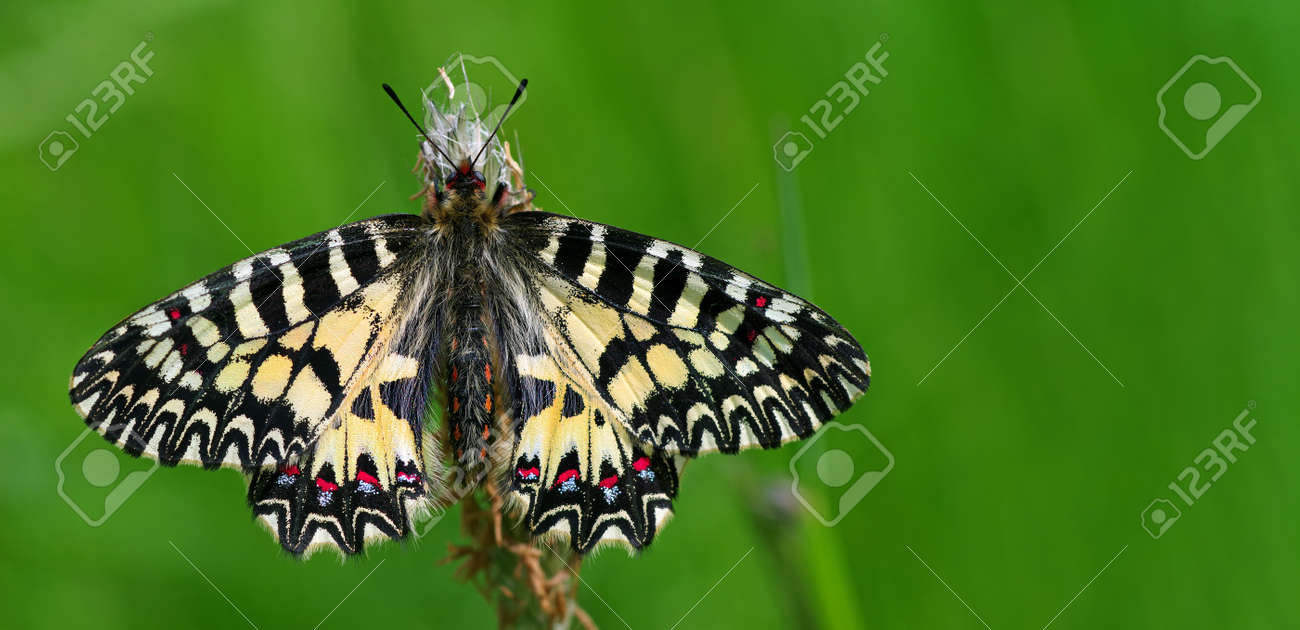 colorful butterfly on green meadow copy space - 169620207