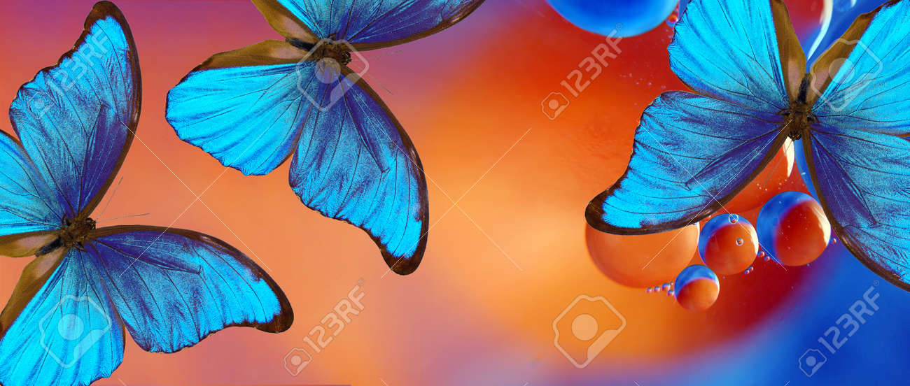 blue tropical morpho butterflies on abstract blurred background. - 169620213