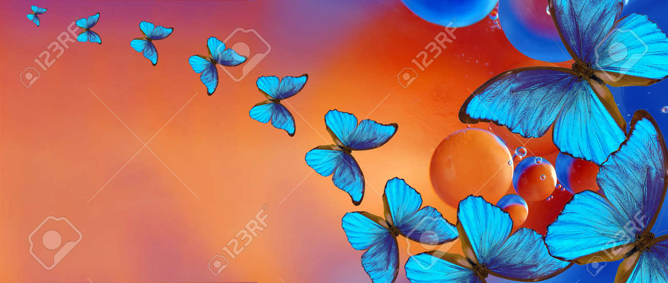 blue tropical morpho butterflies on abstract blurred background. - 169620220