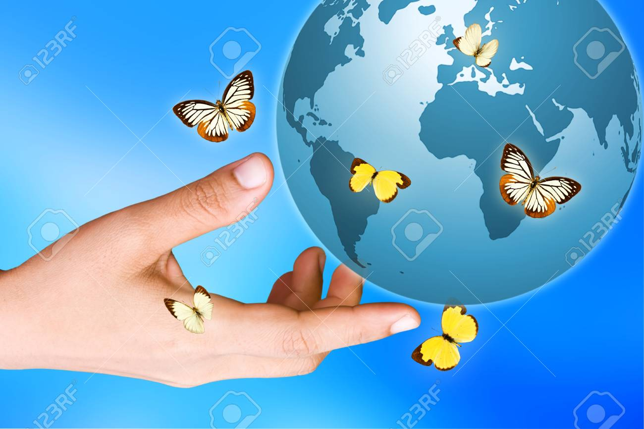 Butterfly Stock Photo - 10997475