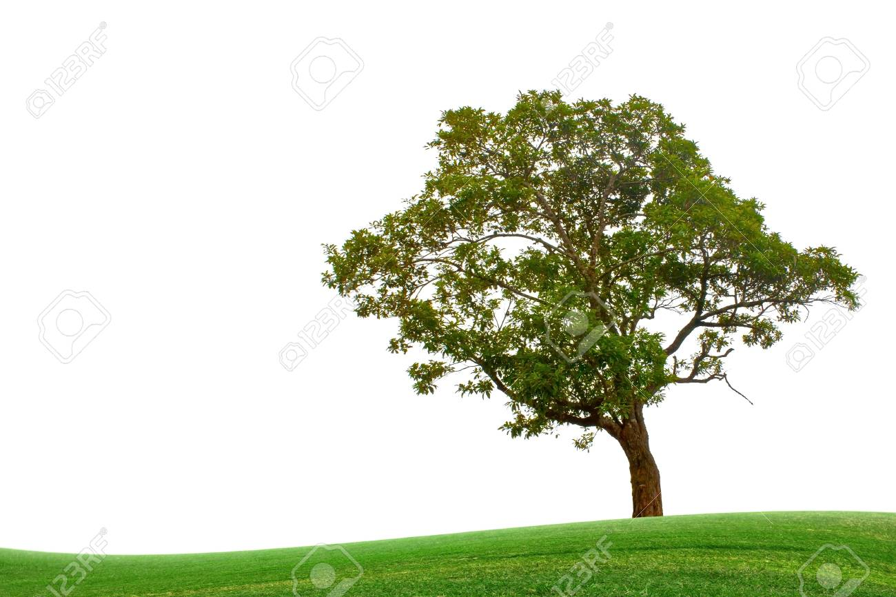 Grass and trees. Stock Photo - 11254564
