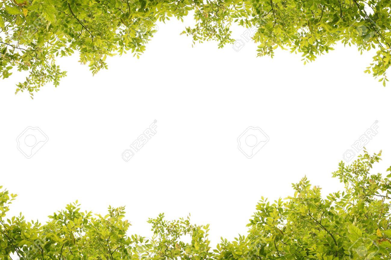 green fresh leaves frame Stock Photo - 10264070