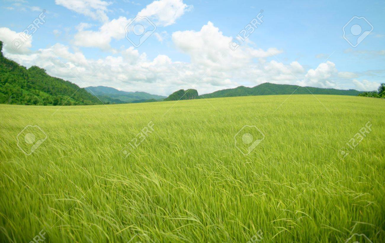 agriculture rice mountain on sky Stock Photo - 10710273