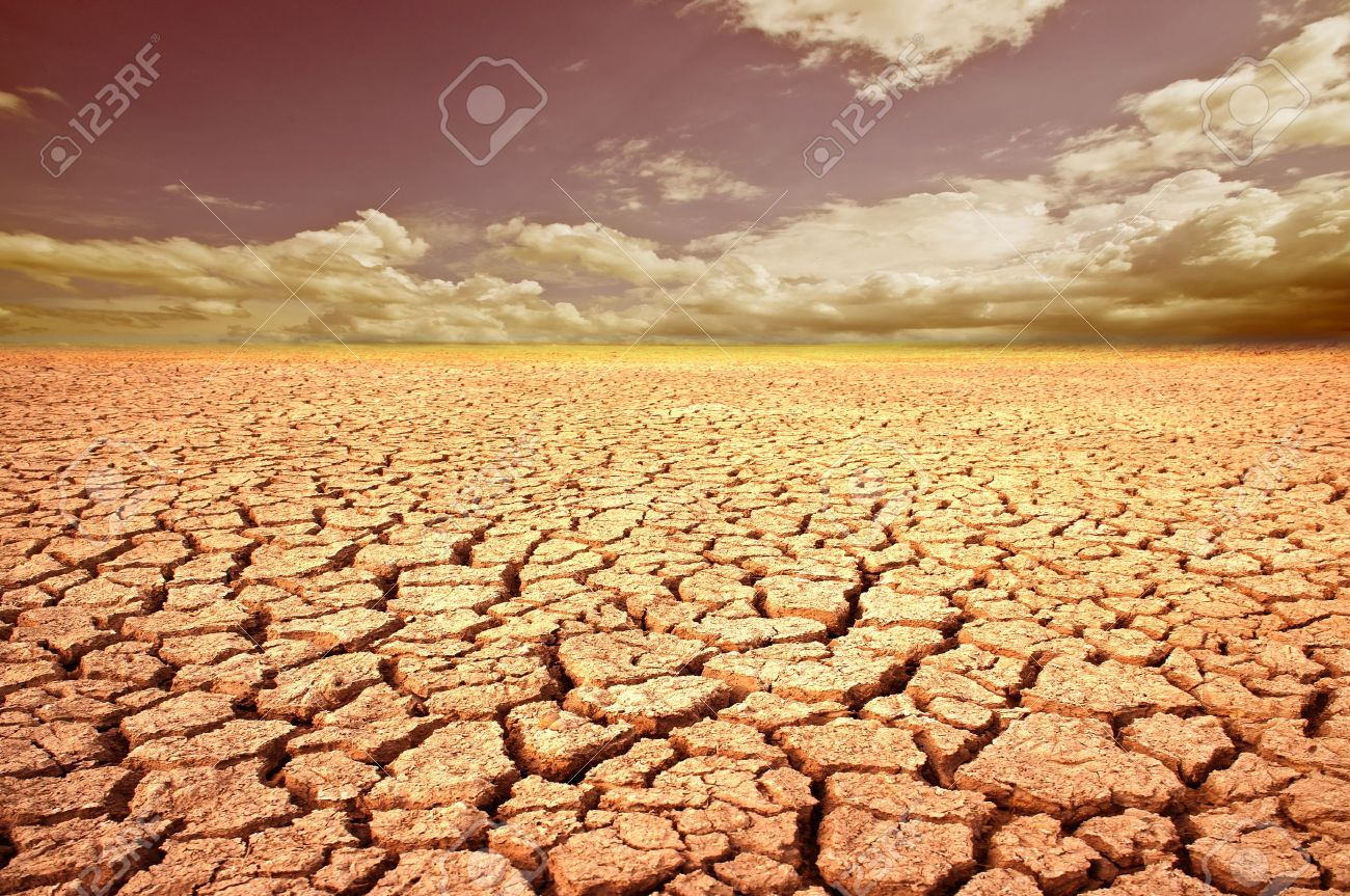 Land with dry and cracked ground. Desert. - 14388953