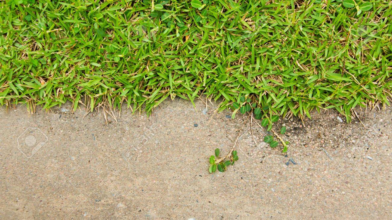 Green grass and concrete Stock Photo - 15151013