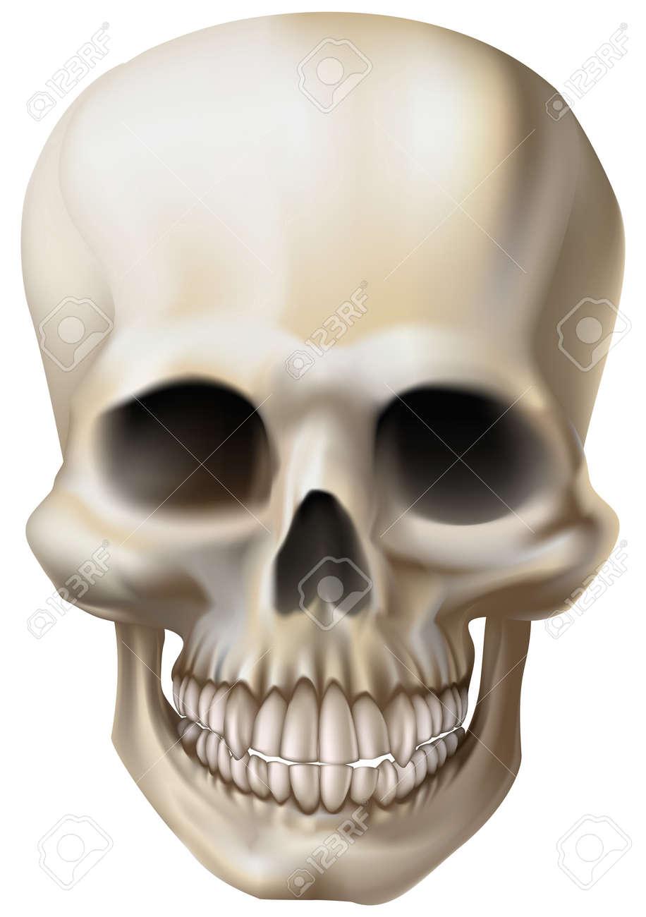 An illustration of a human skull Stock Vector - 7585861