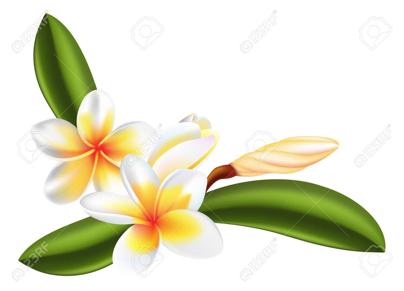 美しいプルメリアやプルメリアの花のイラスト ロイヤリティフリー