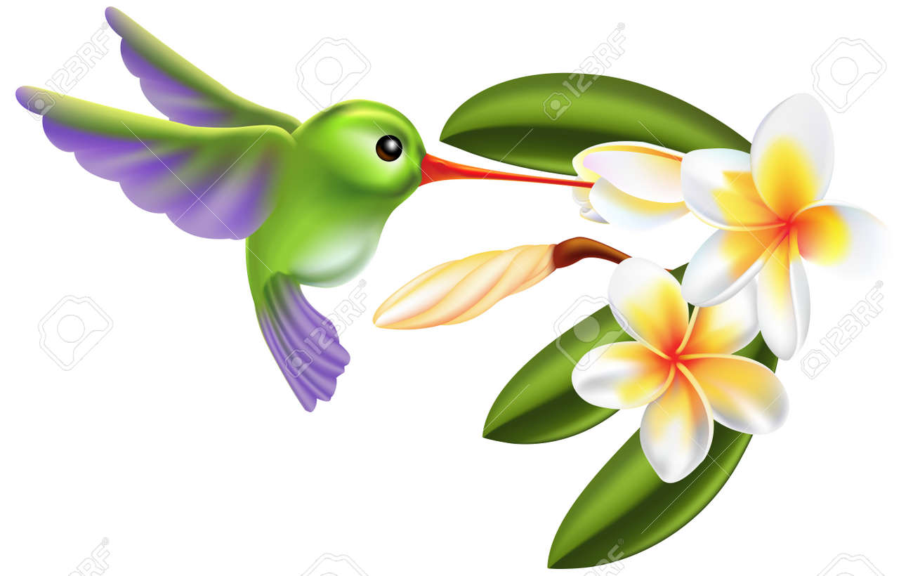 Illustration of a humming bird and flowers Stock Vector - 7844799
