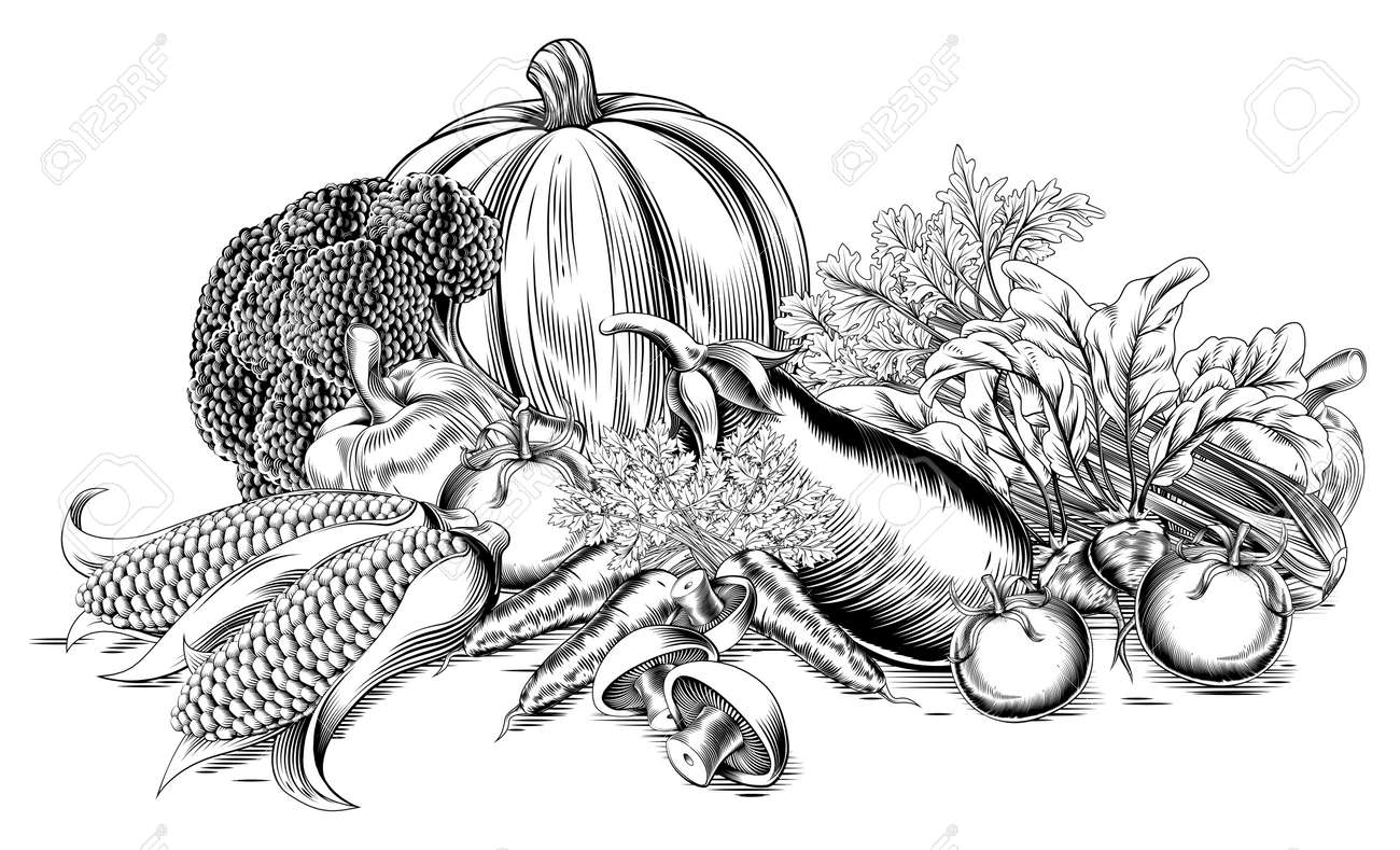 A Vintage Retro Woodcut Print Or Etching Style Vegetable Fresh ...
