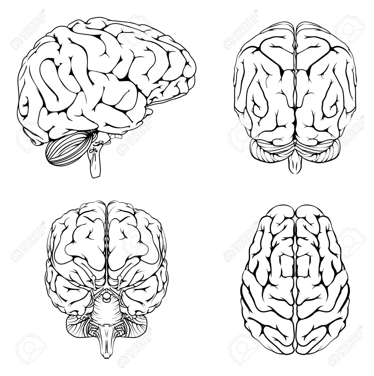 A diagram of a brain from the top side front and back in outline a diagram of a brain from the top side front and back in outline stock vector ccuart Choice Image