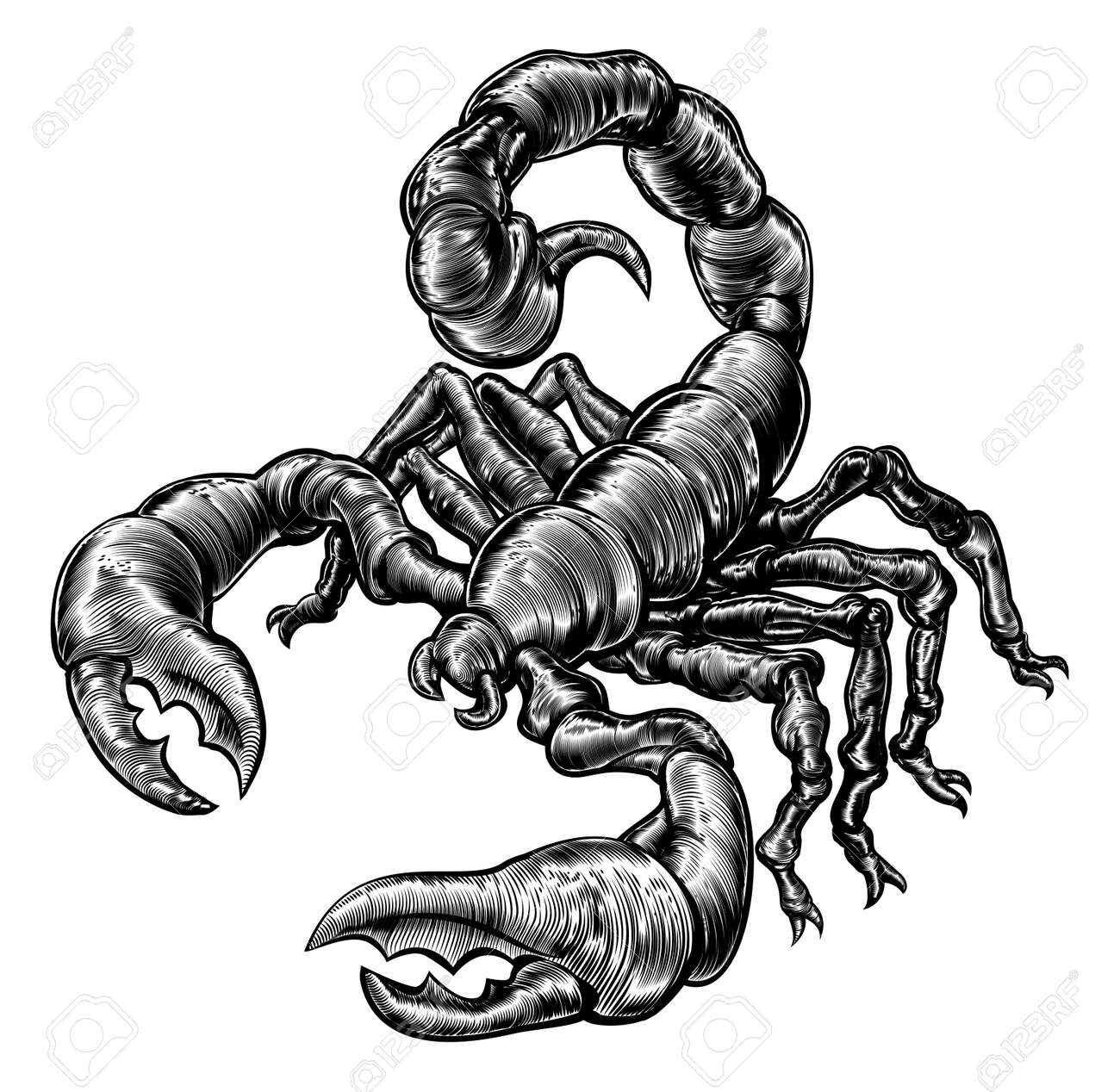an original illustration of a scorpion in a vintage woodblock