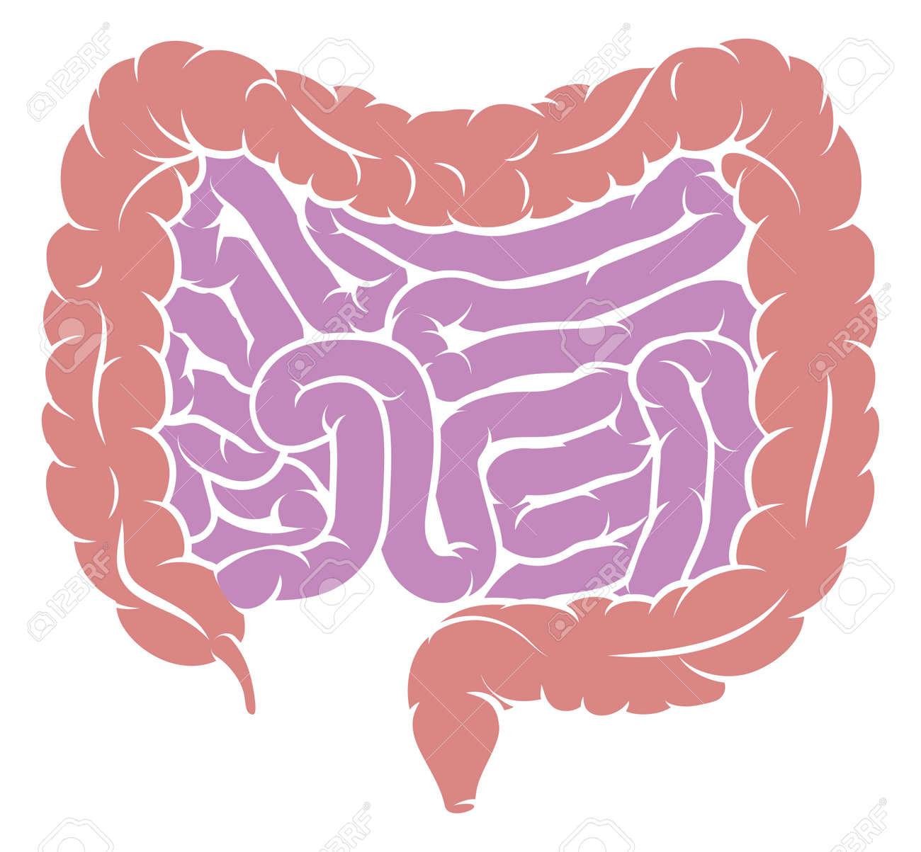 Human digestive system intestines diagram. - 93008093