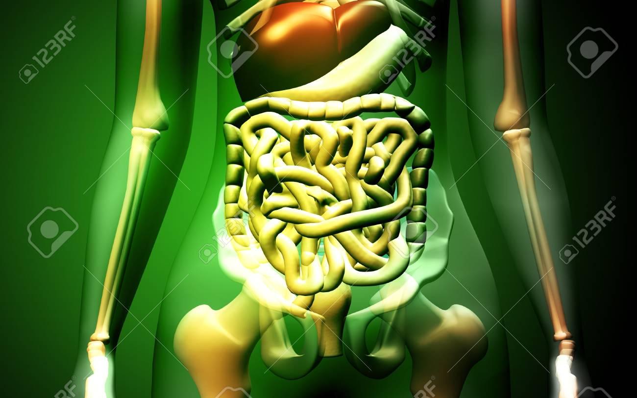 Digital illustration of human digestive system in colour background Stock Illustration - 5577255