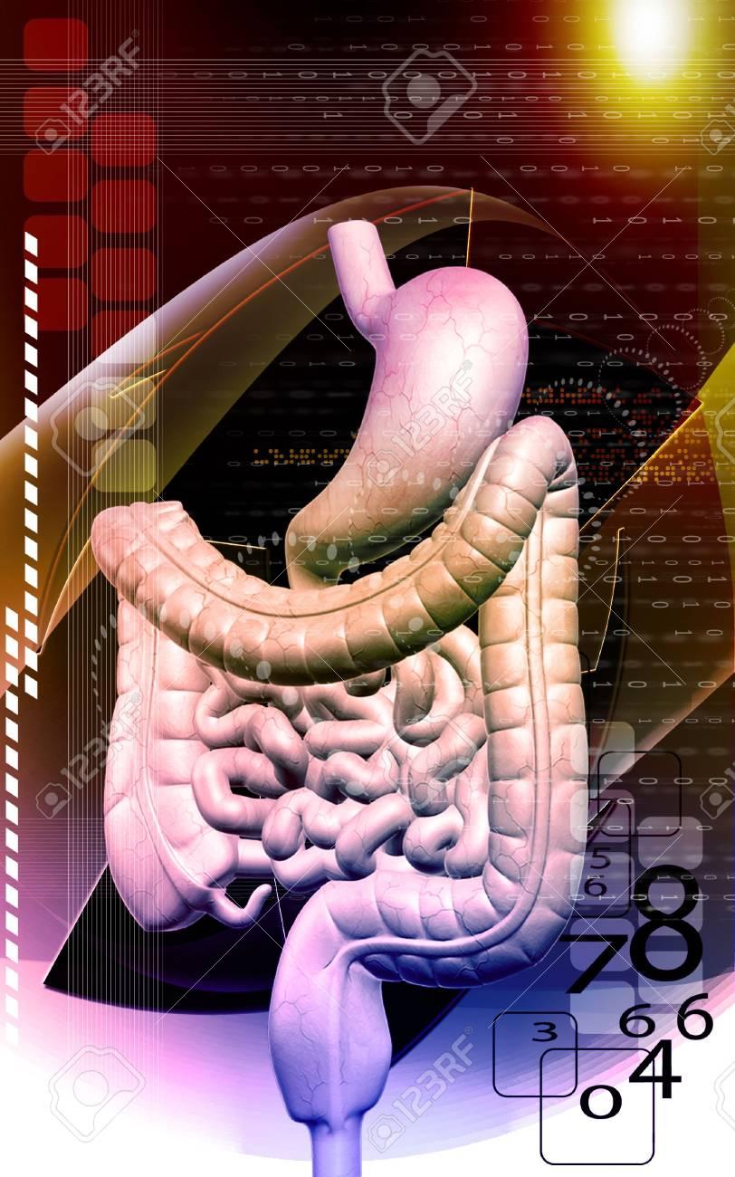 Digital illustration of human digestive system in colour background Stock Illustration - 5609600