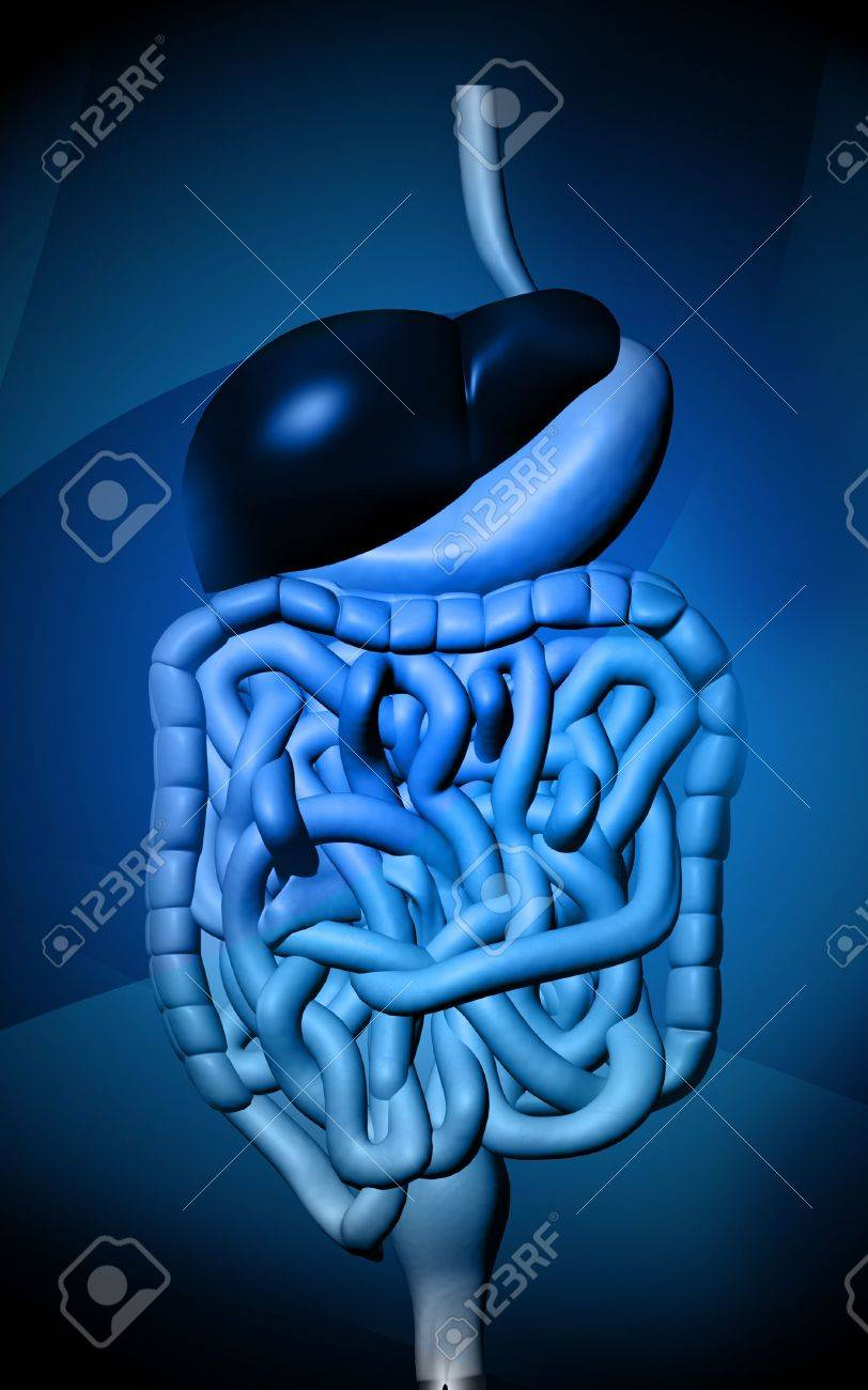 Digital illustration of human digestive system in colour  background Stock Illustration - 5758285