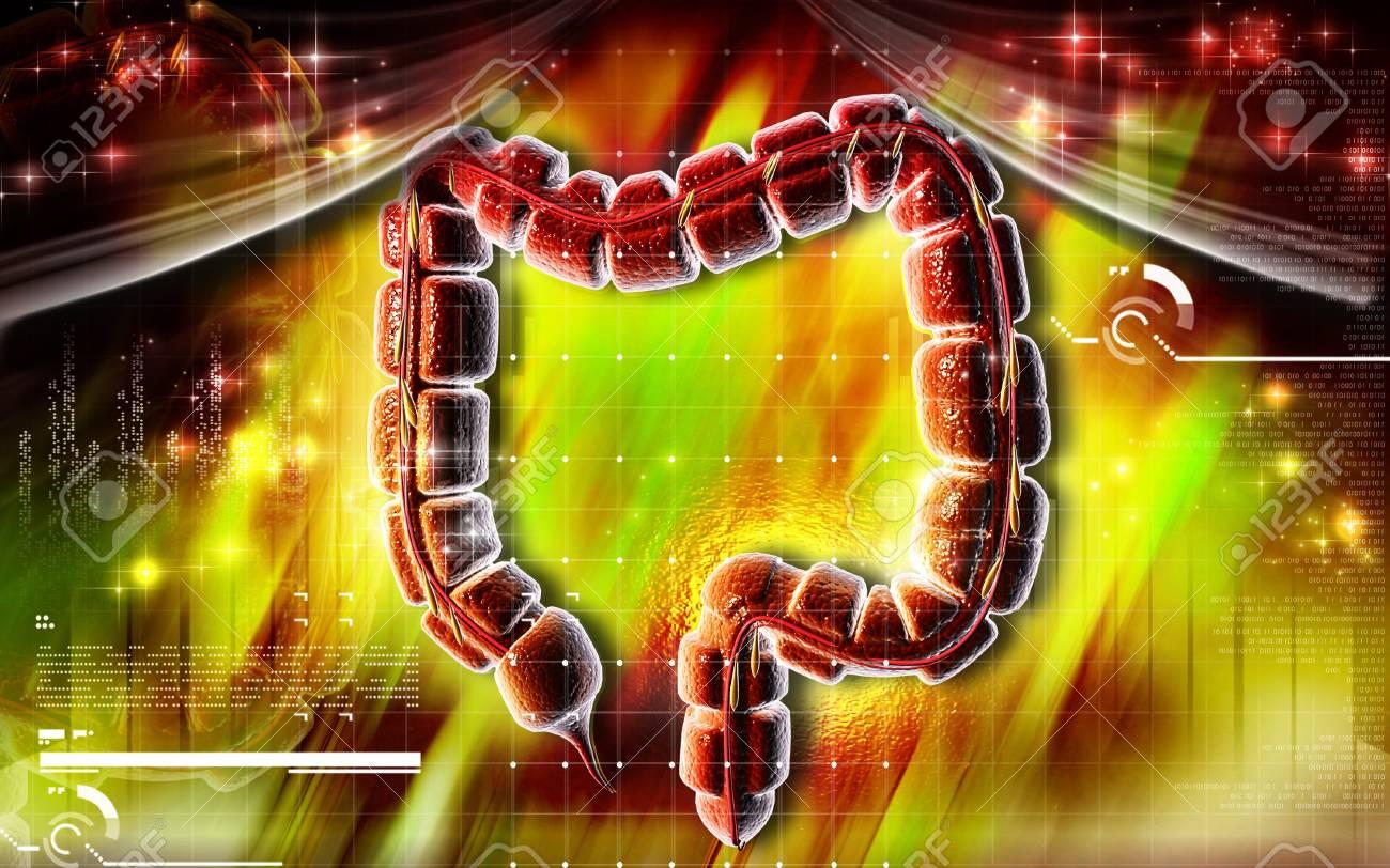 Digital illustration of large intestine in colour background Stock Photo - 6967862