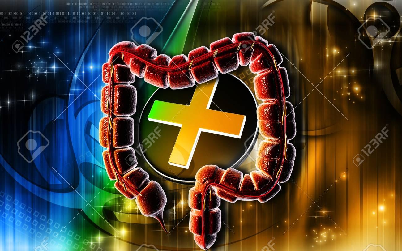 Digital illustration of large intestine in colour background Stock Illustration - 7151415
