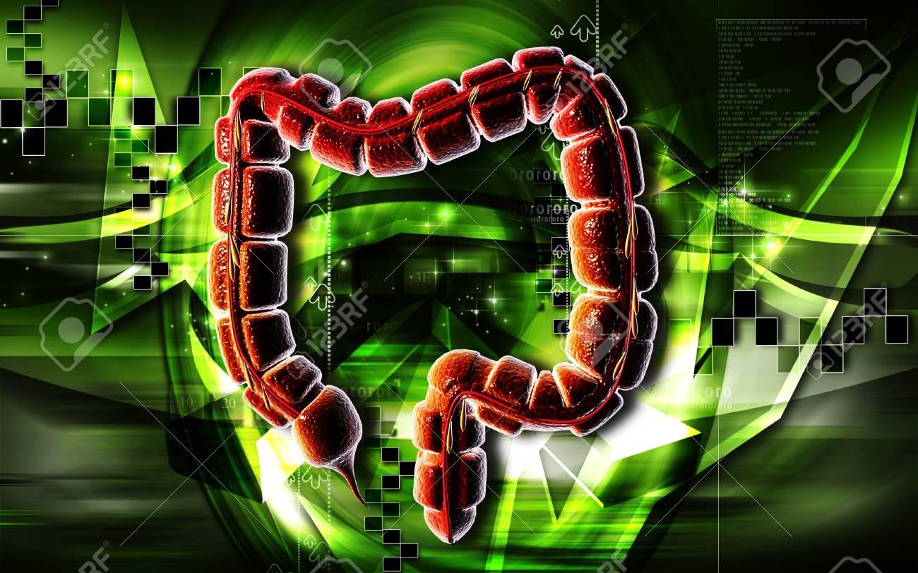 Digital illustration of large intestine in colour background Stock Photo - 7203290