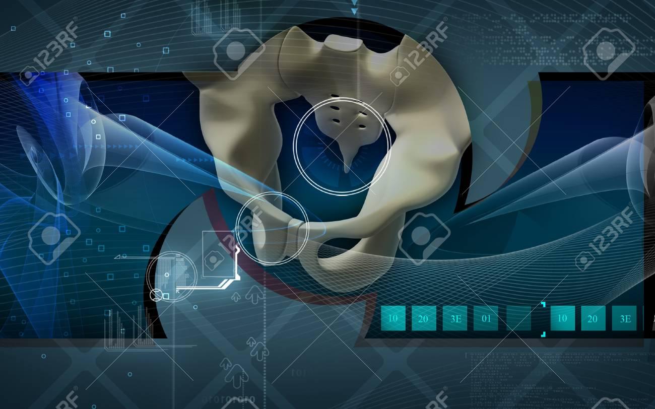 Digital illustration  of pelvic girdle in    colour background Stock Photo - 8017720