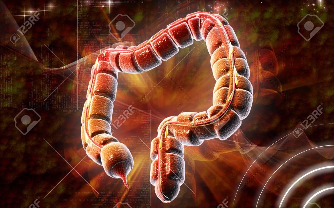 Digital illustration of large intestine in colour background Stock Illustration - 8320809