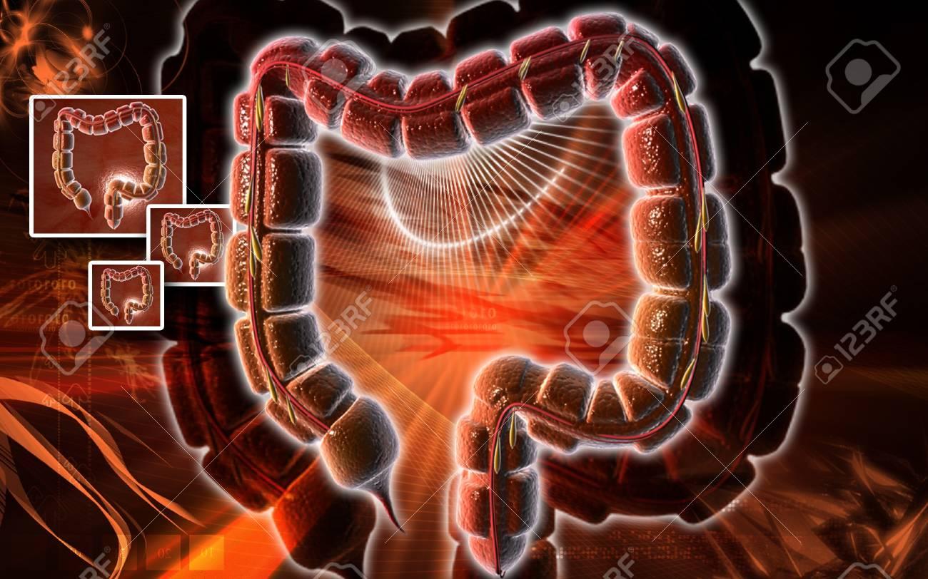 Digital illustration of large intestine in colour background Stock Illustration - 8364920