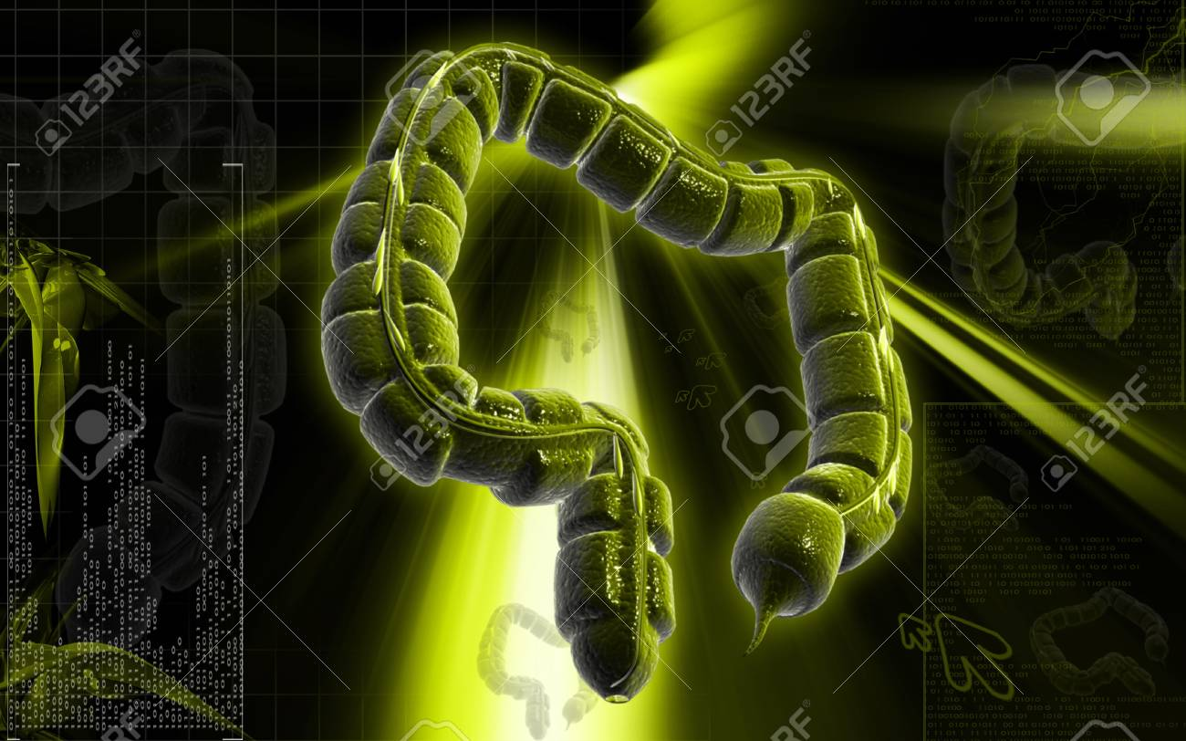 Digital illustration of large intestine in colour background Stock Illustration - 8933514