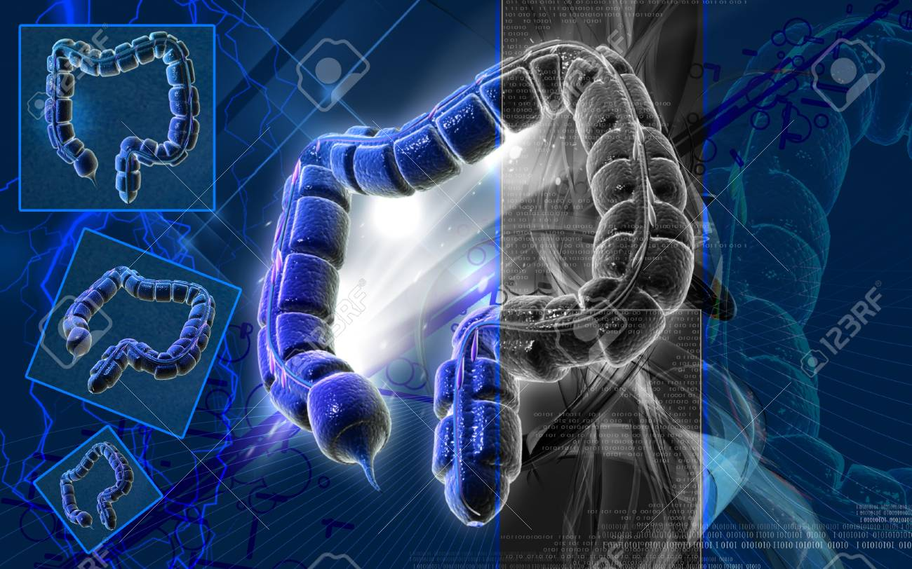 Digital illustration of large intestine in colour background Stock Photo - 9089088
