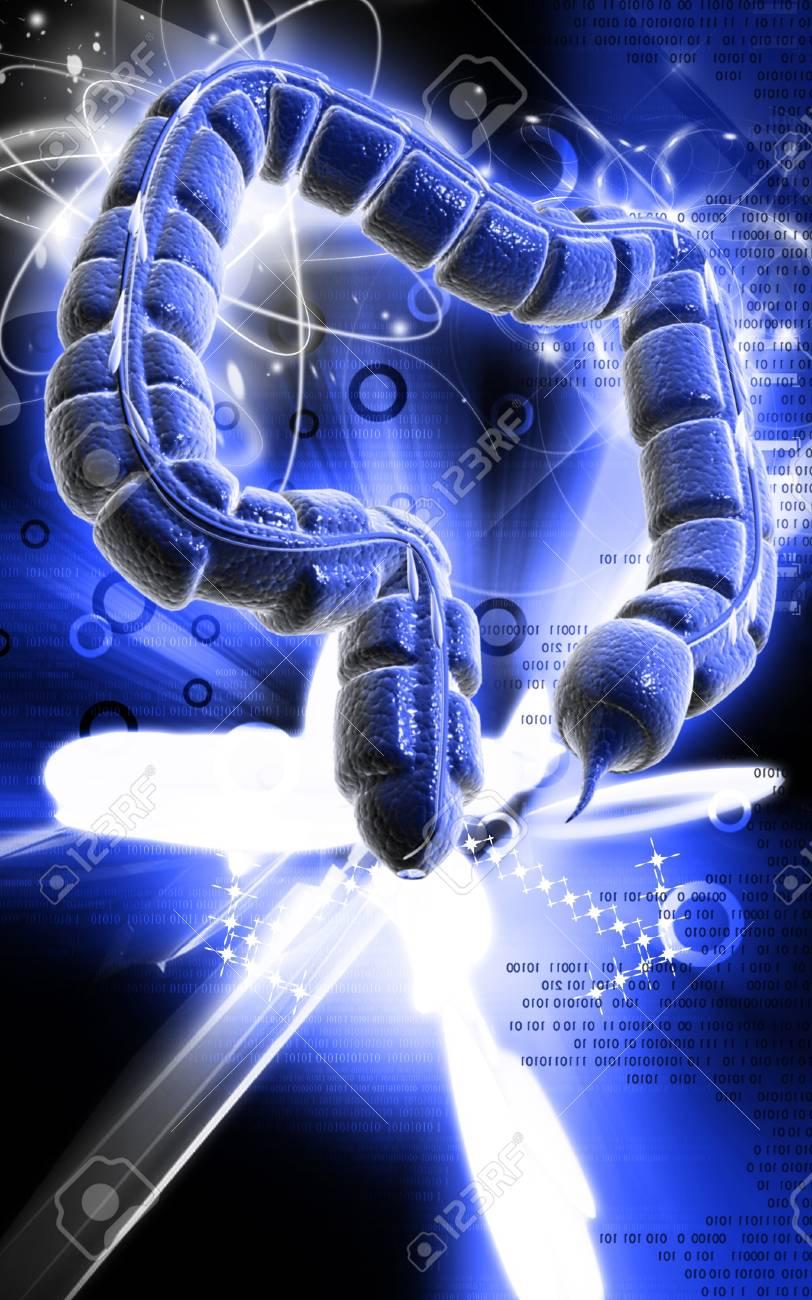 Digital illustration of large intestine in colour background Stock Photo - 9308352