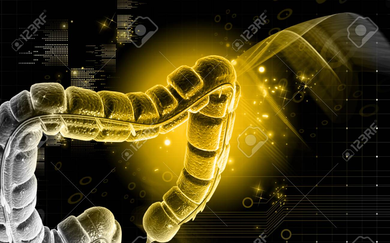 Digital illustration of large intestine in colour background Stock Illustration - 10028786