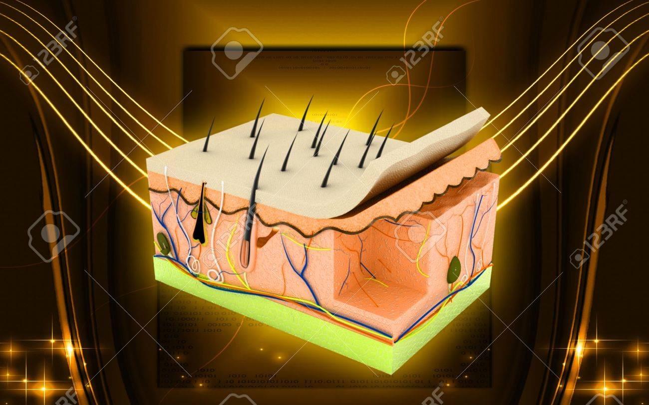 Digital illustration of Skin in colour background Stock Illustration - 10333461