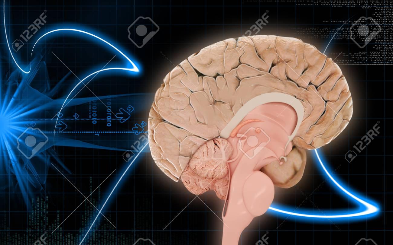 Digital illustration of  brain in colour  background Stock Photo - 10360477