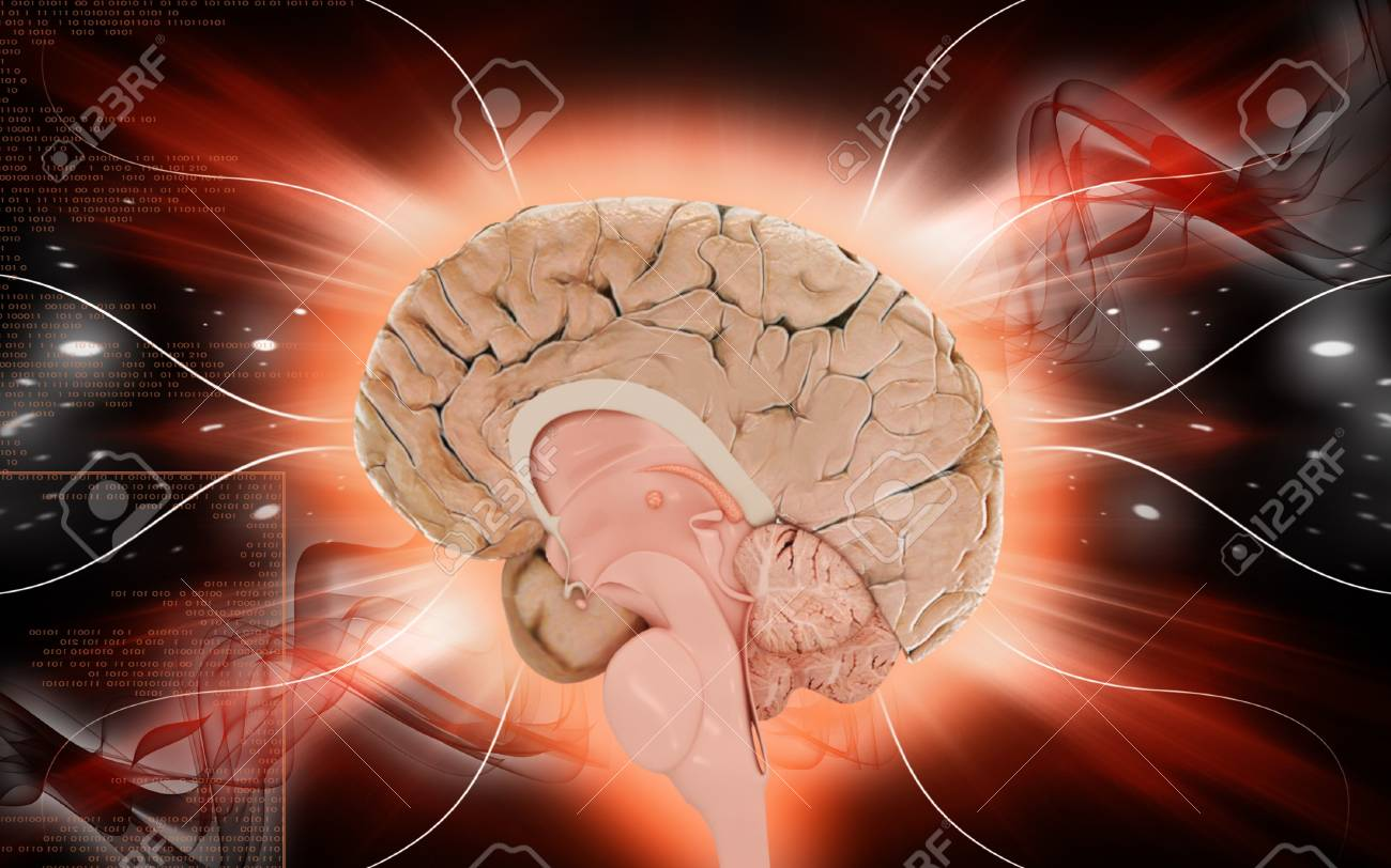 Digital illustration of  brain in colour  background Stock Illustration - 10433640