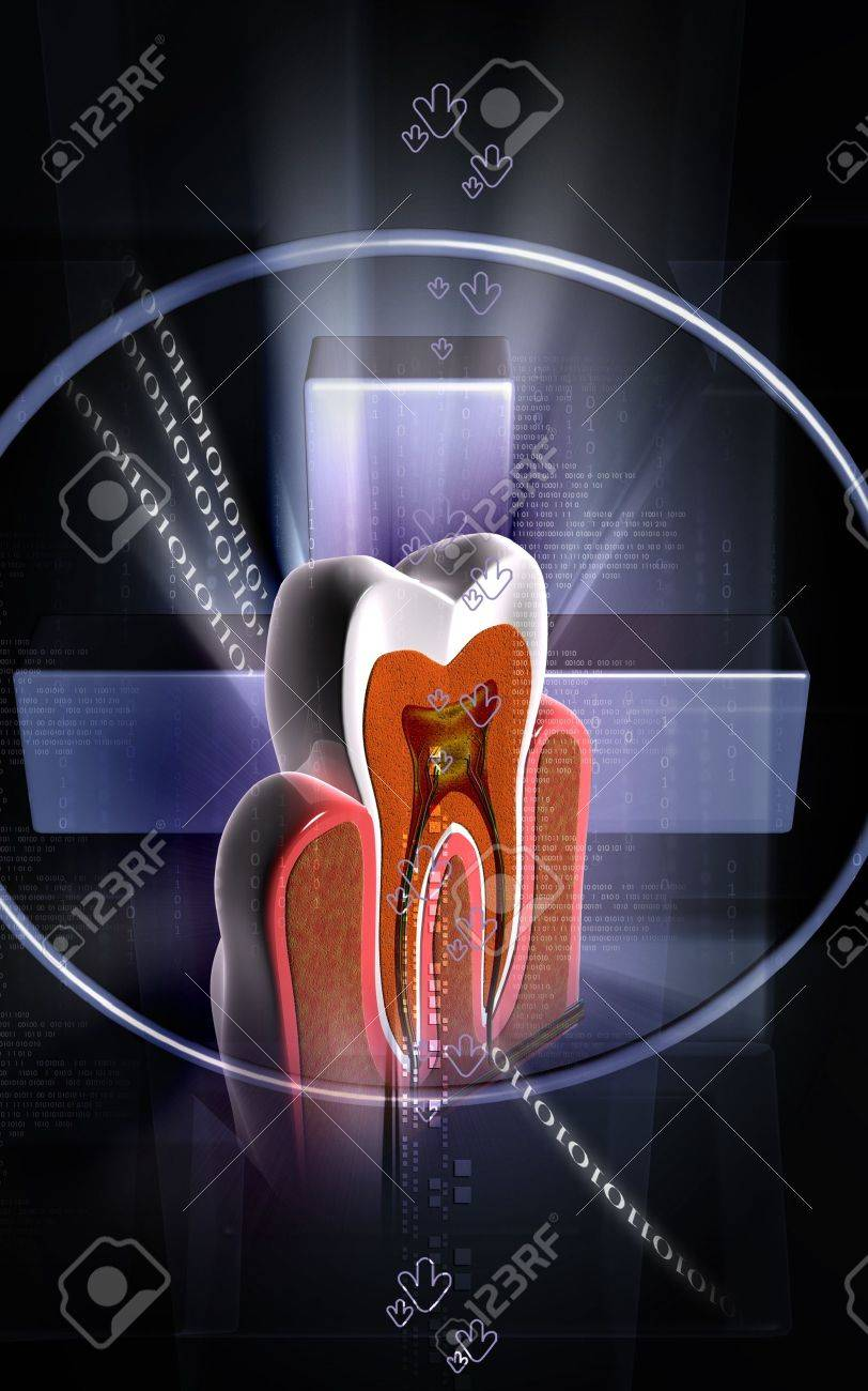 Digital illustration of  teeth cross section   in  colour  background Stock Photo - 11086864