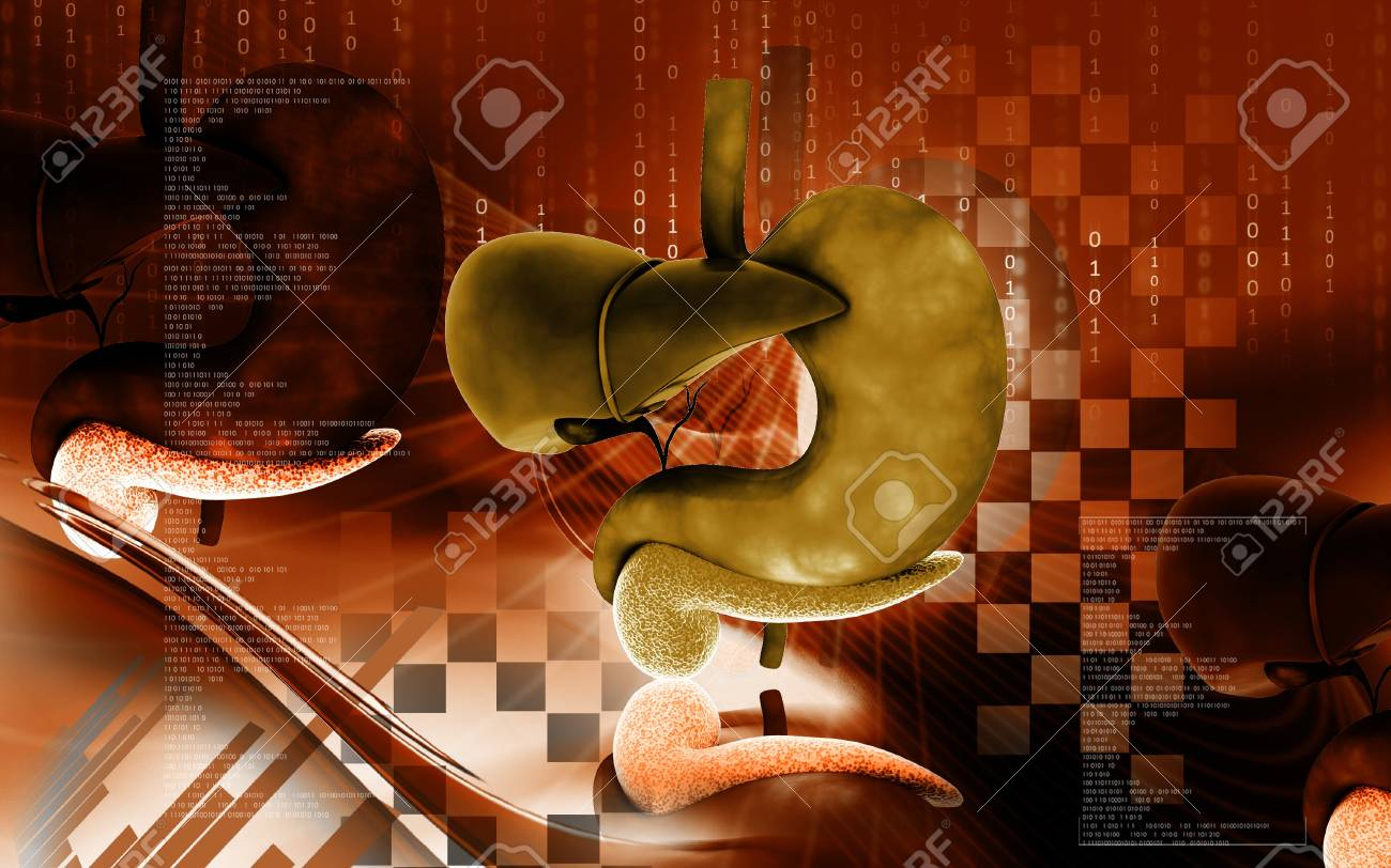 Digital illustration of          Liver and stomach in colour  background Stock Illustration - 12745423