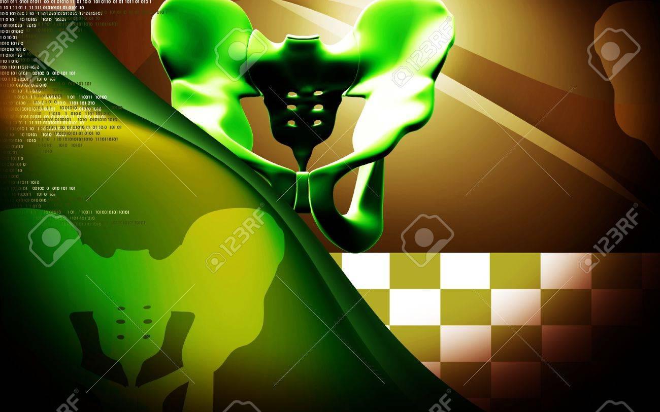 Digital illustration  of pelvic girdle in    colour background Stock Photo - 20383459