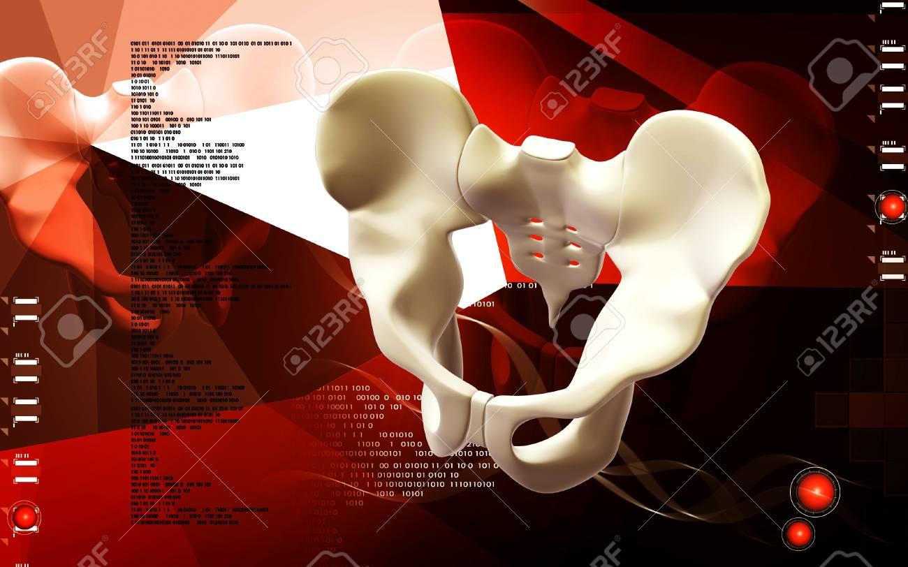 Digital illustration  of pelvic girdle in    colour background Stock Photo - 13703551