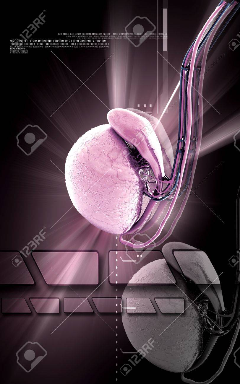 Digital illustration   of Testicles in colour background Stock Photo - 15393208