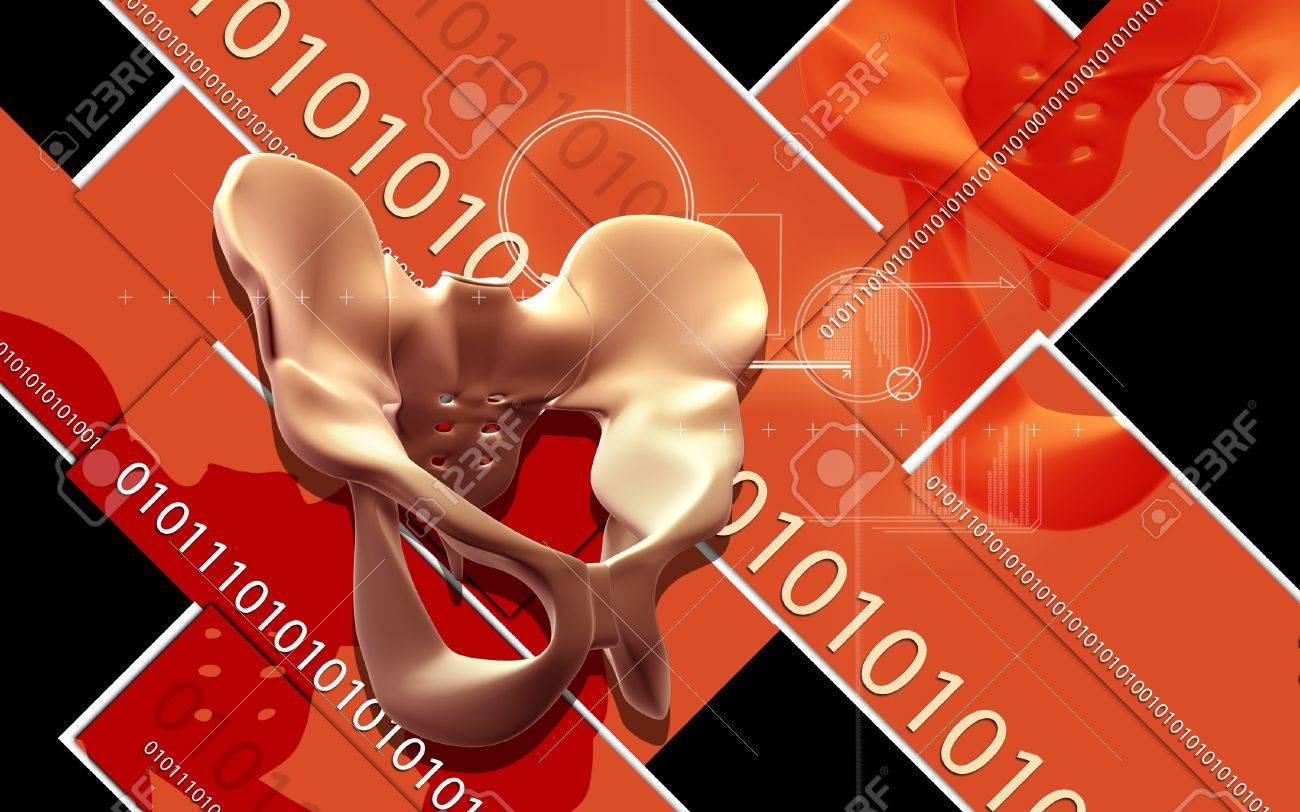 Digital illustration  of pelvic girdle in    colour background Stock Illustration - 20360424