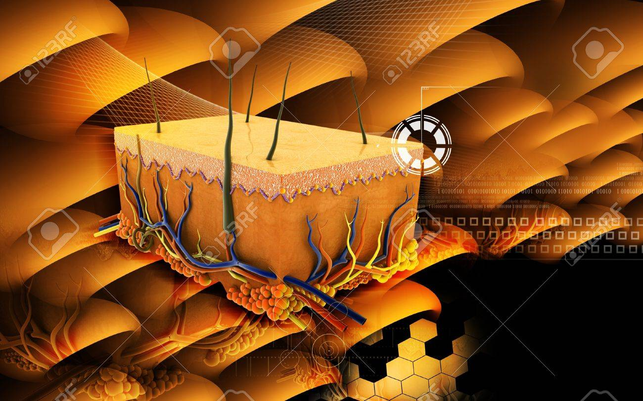 Digital illustration of Skin in colour background Stock Photo - 17021055