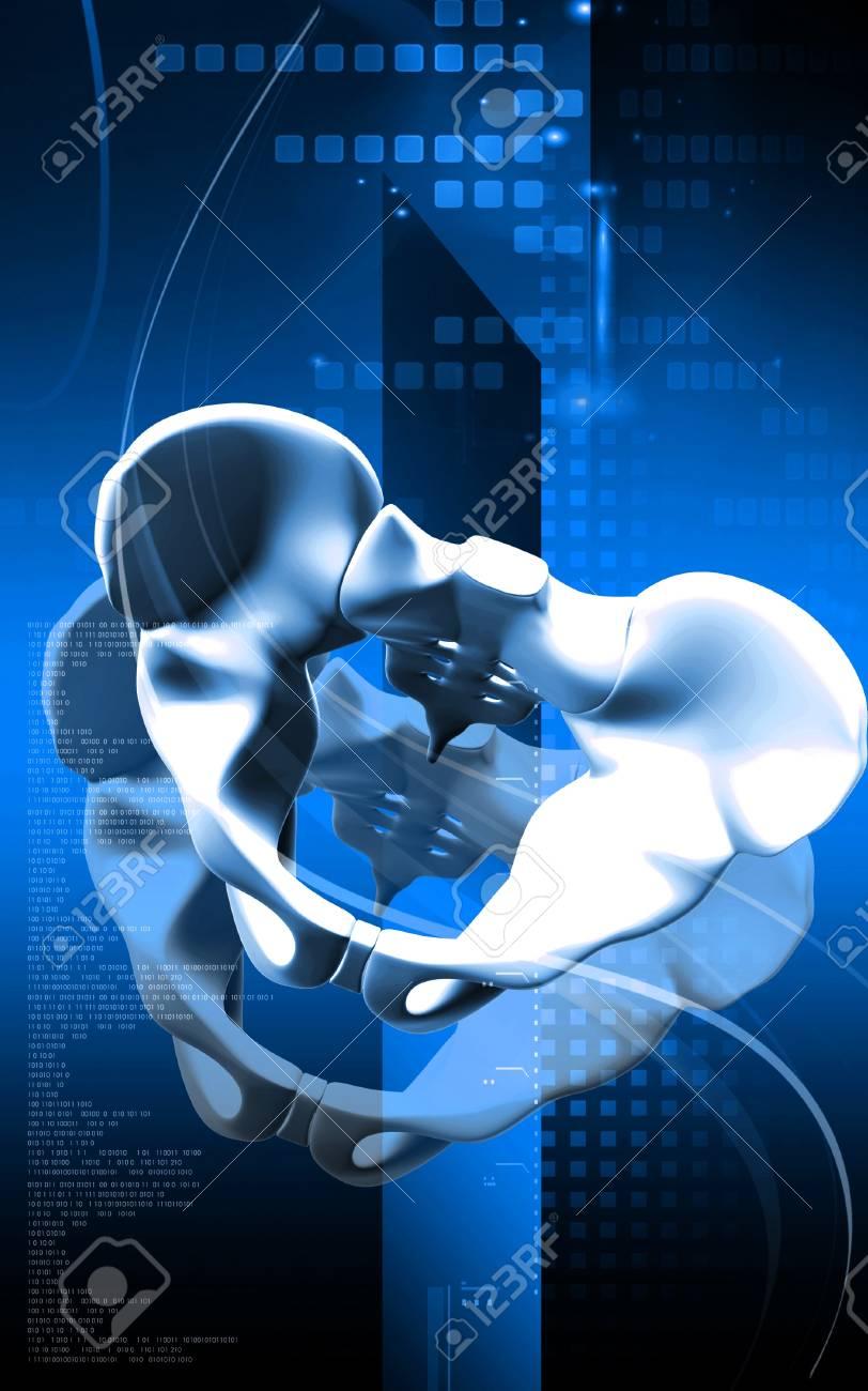Digital illustration  of pelvic girdle in    colour background Stock Photo - 17104410