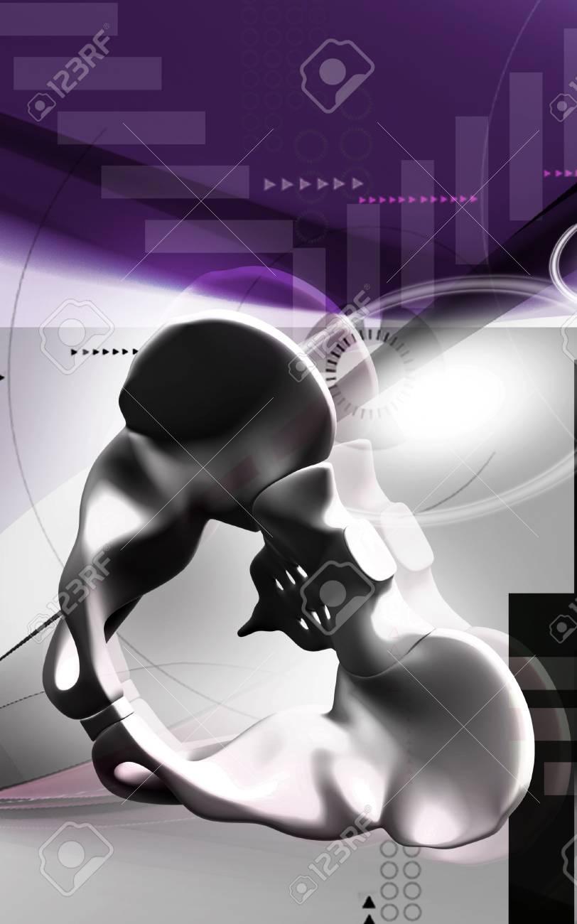 Digital illustration  of pelvic girdle in    colour background Stock Photo - 18511360