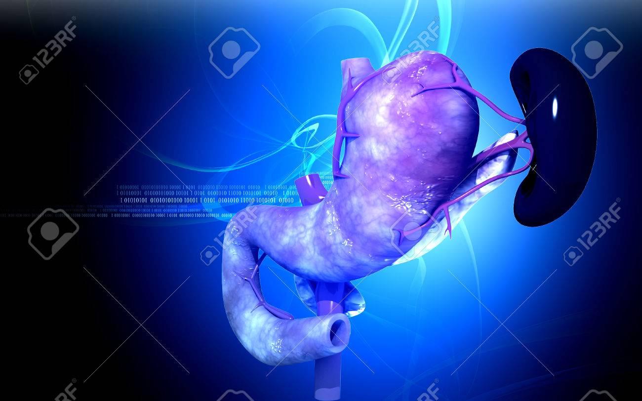 Digital illustration of  pancreas and spleen  in colour  background Stock Illustration - 22807014