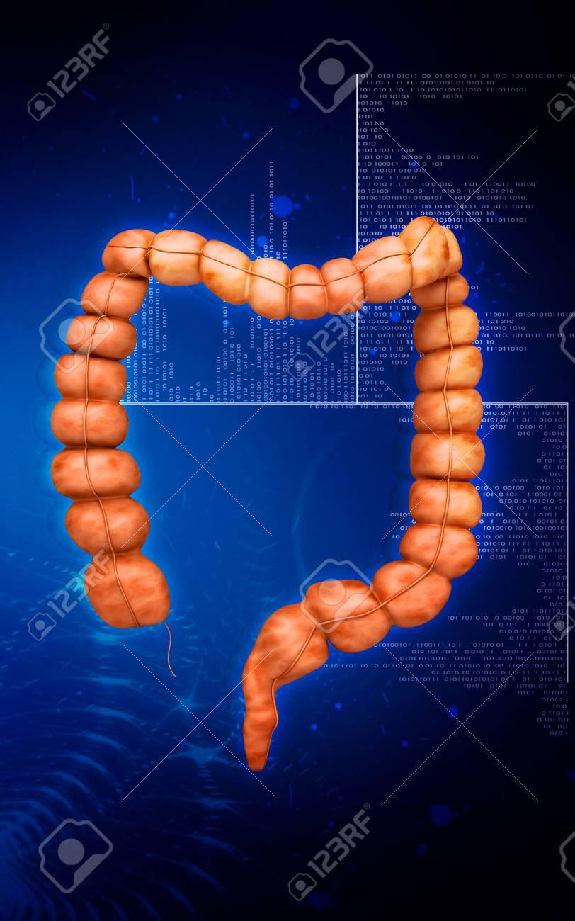Digital illustration of  Intestine in colour  background Stock Photo - 24090521