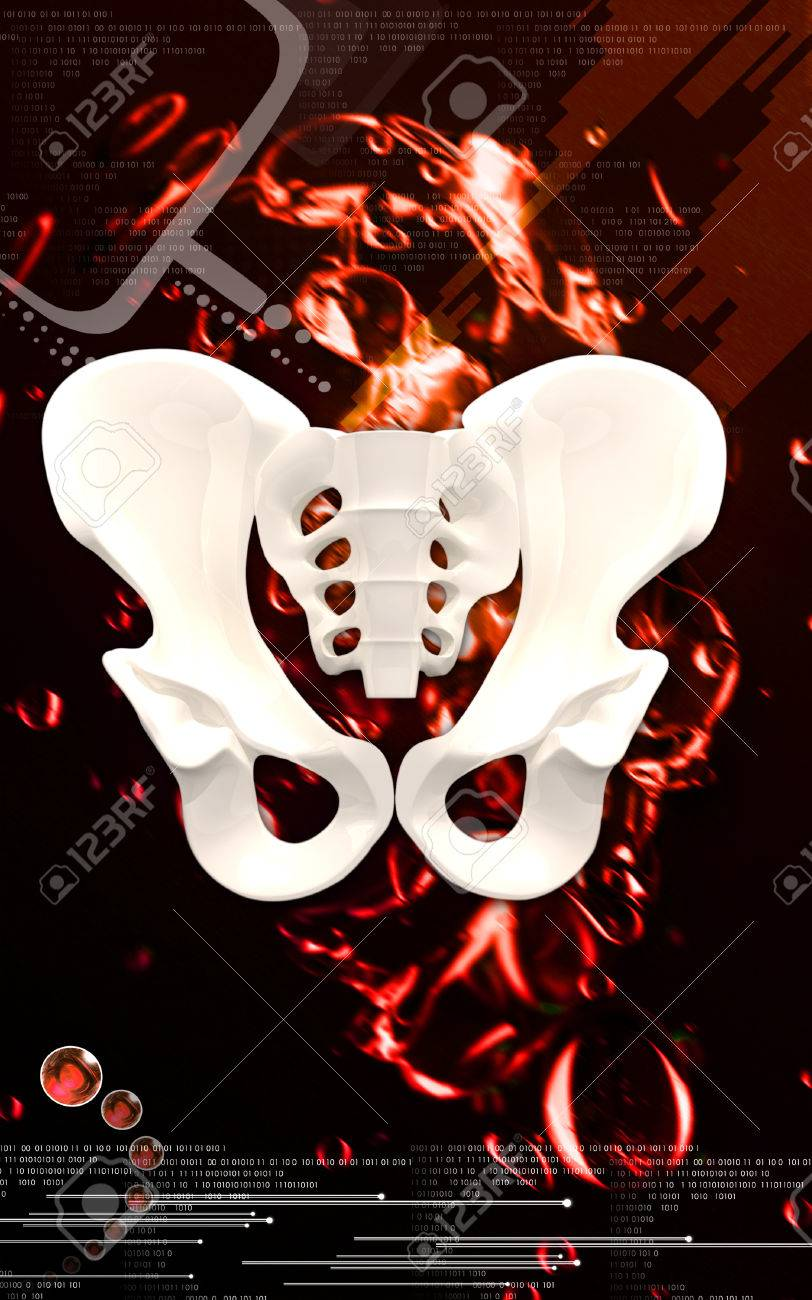 Digital illustration  of pelvic girdle in    colour background Stock Illustration - 24299657