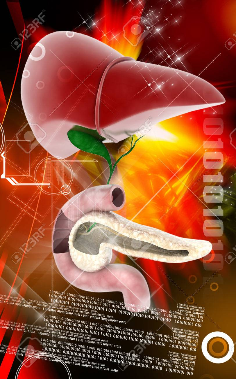 Digital illustration of  Pancreas and Liver in colour  background Stock Illustration - 25640490